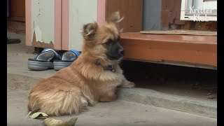 Dog Born With No Legs Has One Hope For Walking | Animal In Crisis EP39
