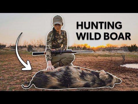 Hog Hunting in Texas – Free Range Wild Pigs!