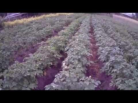 Отзыв о Дегидраторе Rawmid Dream Vitamin DDV-07 - YouTube