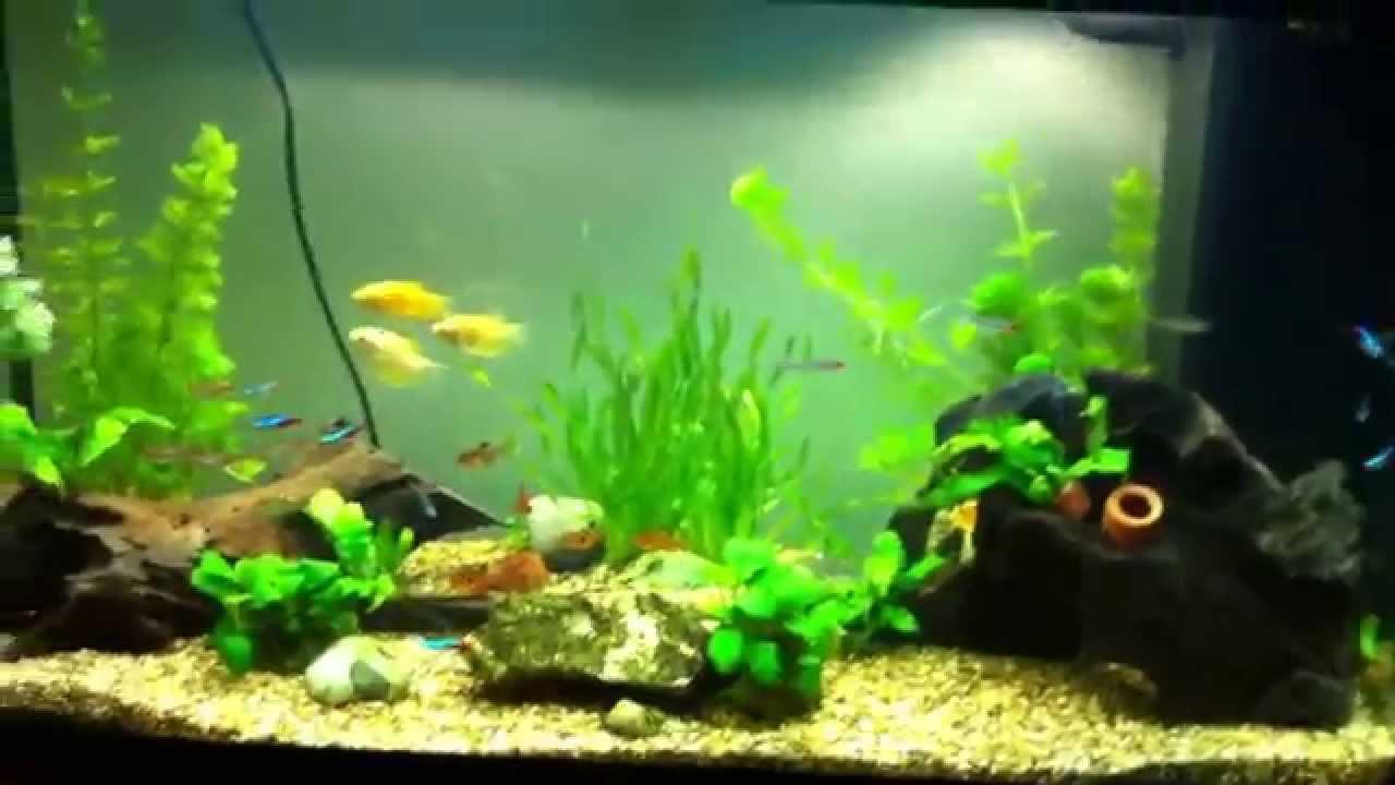 juwel rio 125 tropical aquarium youtube. Black Bedroom Furniture Sets. Home Design Ideas