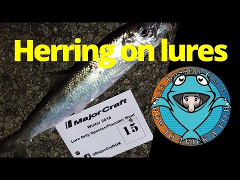 Herring on lures lrf style