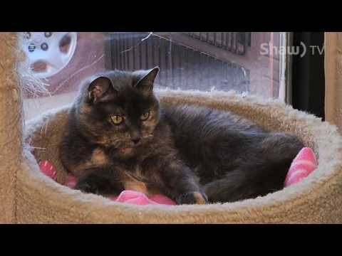 SPCA - Cat to Adopt