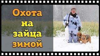 Охота на зайца зимой с русскими гончими или из крайности в крайность.