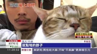 紅翻!貓咪打拍子跟主人超同步 萌到美國艾倫秀都播牠 | 三立新聞