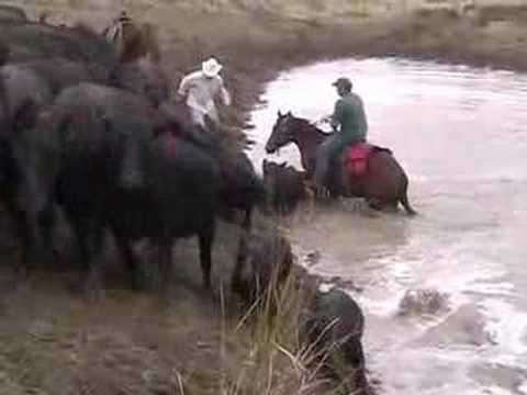 Cattle Drive Wyoming 2006