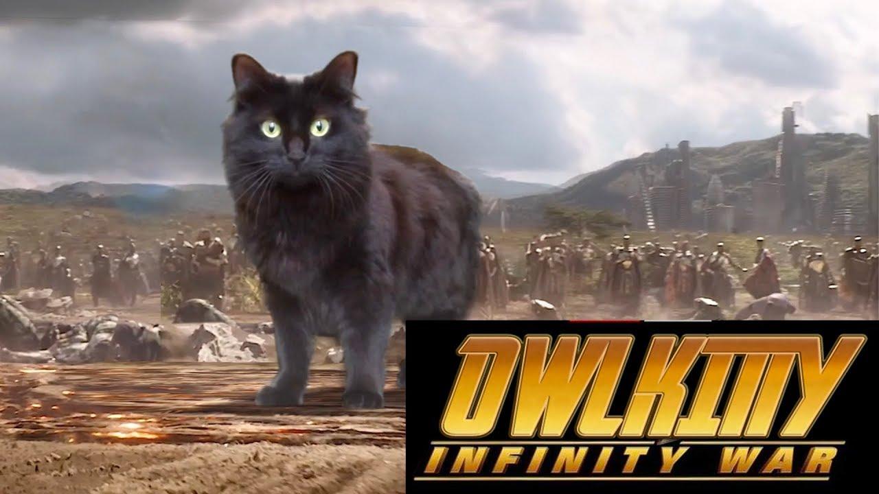 OwlKitty - Infinity War