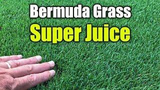 Liquid Lawn Fertilizer - Spray Treatment for Lawns