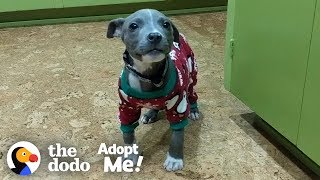 This Pittie Is So Special And She NEEDS A Loving Family | The Dodo Adopt Me!