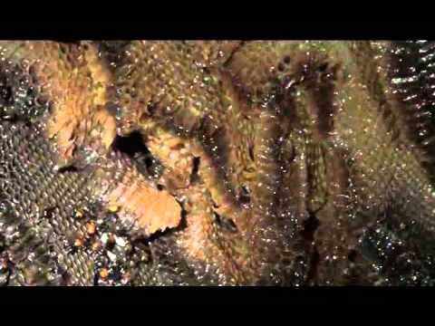 Pt. 2 Honeybee Heaven