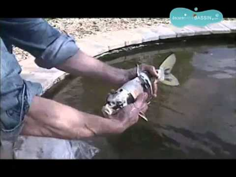 Comment cr er un bassin poissons dans son jardin doovi for Carpe koi truffaut