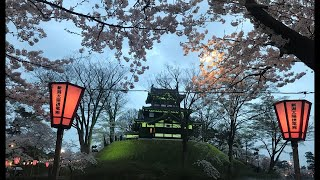 日本一周女ひとり旅265日目。新潟県高田公園で夜桜Live