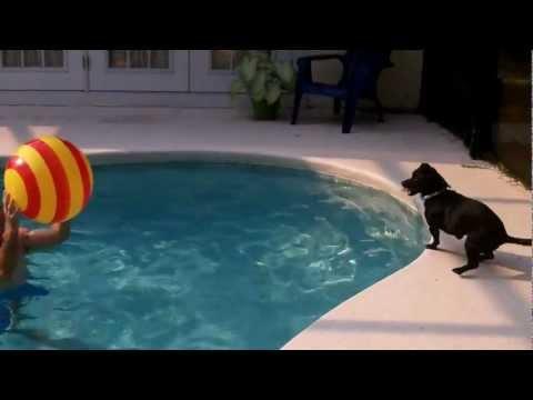ball heading dog