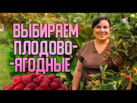 Выбираем плодово-ягодные