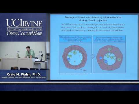 Biological Sciences M121. Immunology with Hematology. Lecture 26. Transplantation and Alloimmunity