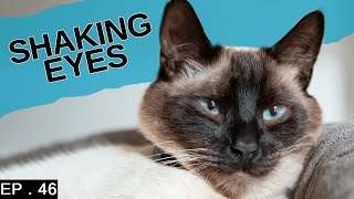 What does shaking eyes in Siamese Cats mean