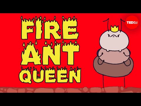 Video image: Mating frenzies, sperm hoards, and brood raids: The life of a fire ant queen - W