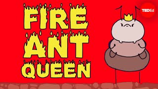 Mating frenzies, sperm hoards, and brood raids: the life of a fire ant queen  Walter R. Tschinkel