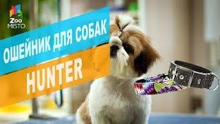 Ошейник для собак Hunter | Обзор ошейника для собак Hunter