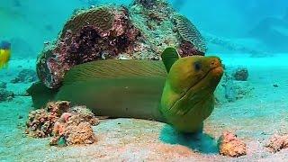 Scuba Diving Aruba (HD - 1080p)