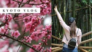 Kyoto Japan Travel Vlog 2017 🌸 Fushimi Inari Taisha, Bamboo Forest, EATING ALL THE THINGS