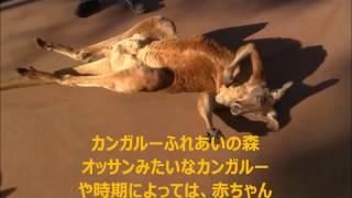 大分アフリカンサファリの動物ふれあいコーナーの映像です。