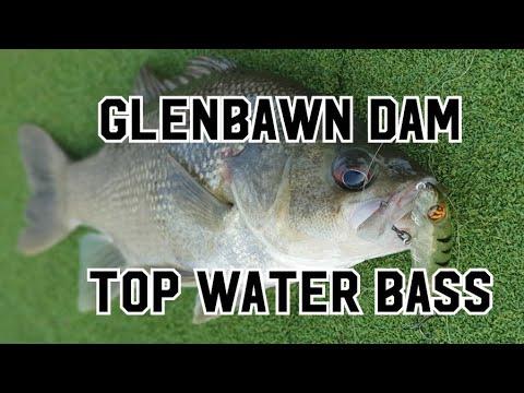 Glenbawn Dam Top Water Bass