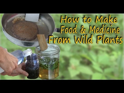 Wild Edible & Medicinal Plant Recipes - A Video Guide