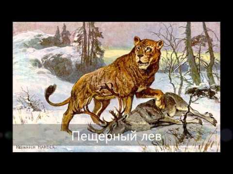 Вымершие животные кайнозойской эры...