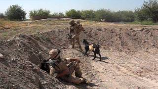 Taliban Goat Attacks  Welsh Guardsman.