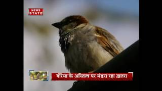 World Sparrow Day is celebrated on the March 20th