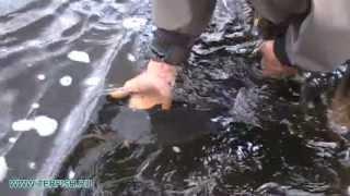Рыбалка на Кольском полуострове. Сёмга. Июнь 2013 год. Лагерь ТЕРФИШ