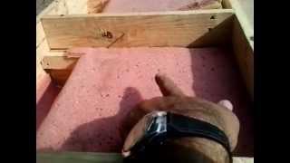 Ninho para Galinhas automatico caseiro