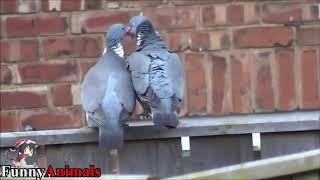 Funy animal kiss