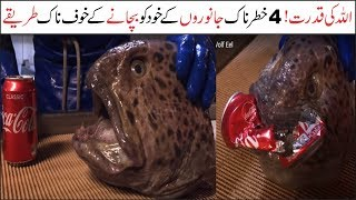 4 Amazing Ways Animals Protect Themselves | Asif Ali TV