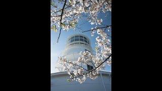 桜咲く時期に訪れた室戸岬の写真を取り入れ、テナーサックスの演奏とコ...