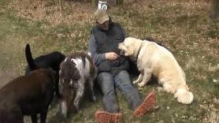 Doggies Retreat Dog Boarders Shropshire and Staffordshire