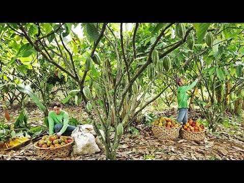 Malagos Cacao Development Center