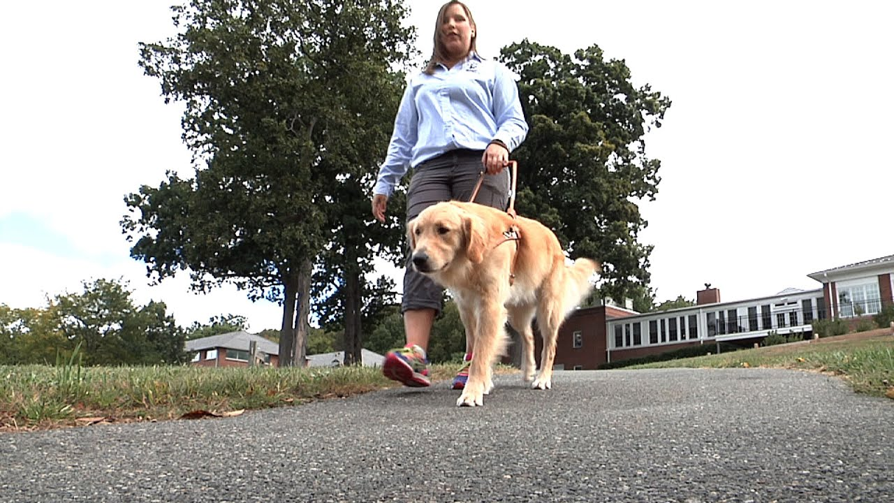 how to get a guide dog for the blind