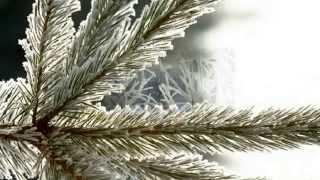 F.Manfredini- Concerto grosso op.3/12 C-Dur(Weihnachtskonzert )