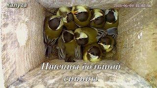 От яйца до взрослого птенца, за несколько минут. г.Калуга 2015г