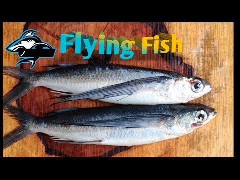 How To Cut Flying Fish | Paravai Kola Meen |  பறவை  கோலா மீன்.