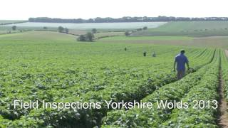 Seed potato training and inspections for Fera's Plant Health & Seeds Inspectors