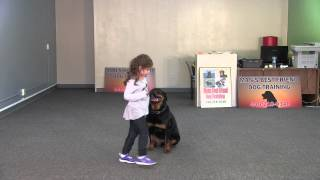 Layla: Amazing Two Year Old Obedience And Protection Trained Rottweiler For Sale: Sold