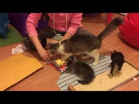Foster Kittens Love New Toys!