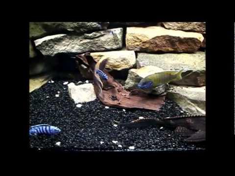 mein 360 liter malawi aquarium youtube. Black Bedroom Furniture Sets. Home Design Ideas