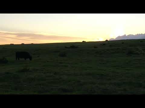 Naalehu, Hawaii sunset 11/2018