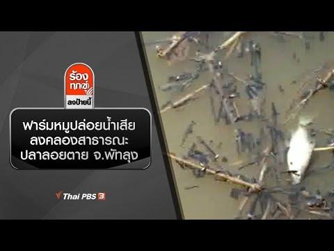 ฟาร์มหมูปล่อยน้ำเสียลงคลองสาธารณะ ปลาลอยตาย จ.พัทลุง - วันที่ 20 Jan 2020