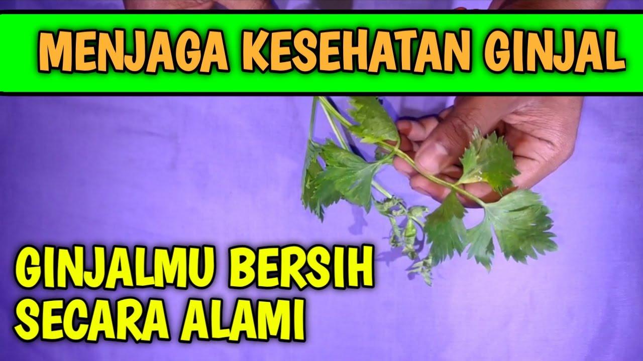 Cara membersihkan ginjal secara alami, Menjaga kesehatan ...