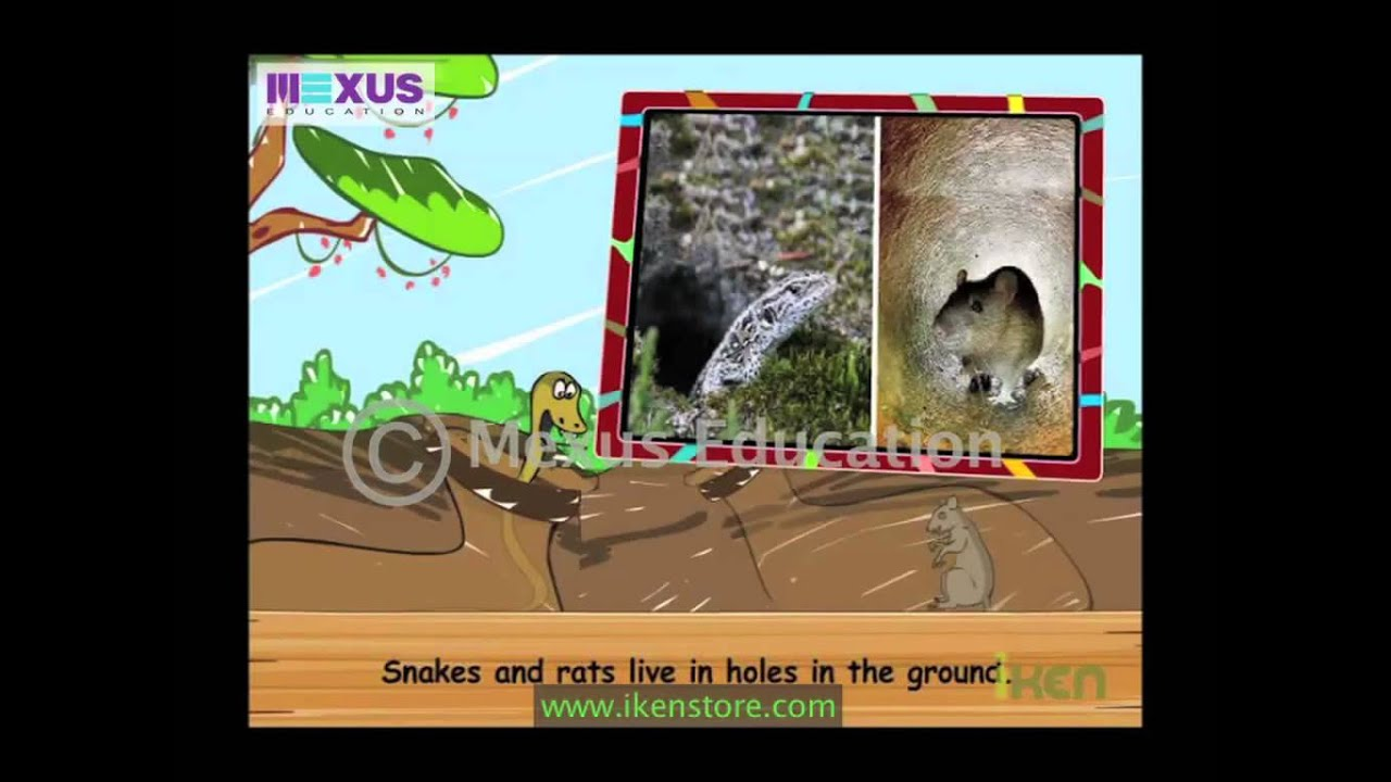kids science learn about the animals and their homes youtube