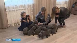 Собака родила сразу 19 щенков